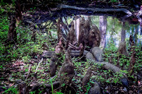 Cypress Knee's Blue Springs Florida Wild Nature Landscape Leigh Wax