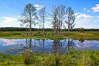 Cypress Marsh Sweetwater Wetlands Florida Wild Nature Landscape Leigh Wax