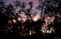 NAB-105-0435-Sunset Through Oaks.
